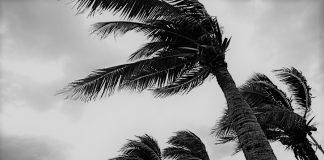 De acuerdo a la información han sido cancelados vuelos desde y hacia Nueva York, Puerto Rico, Haití, Panamá, Venezuela.