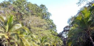 """En este año, el país lanzó su identidad turística """"Costa Rica: My Choice, Naturally"""""""