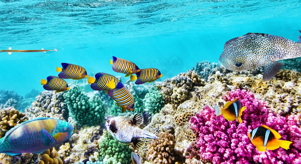 Image result for Great Barrier Reef, Australia