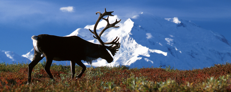 Alaska-Denali-National-Park