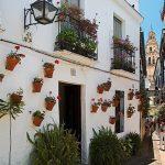 Su presencia en FITUR está organizada por la Red de Juderías de España-Caminos de Sefarad, asociación constituida por 18 ciudades que trabajan conjuntamente
