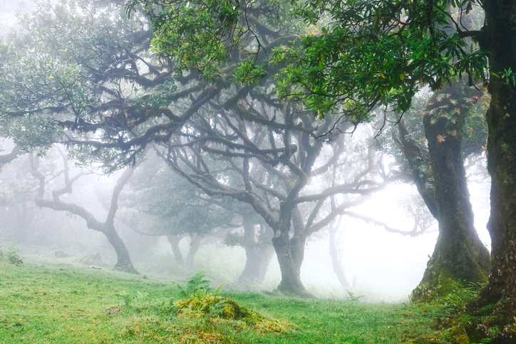 Madeira-bosque-de-laurisilva