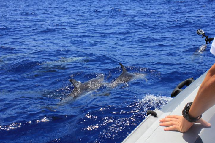 delfines-madeira